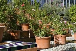 Expo IMA Jardins d'Orient2