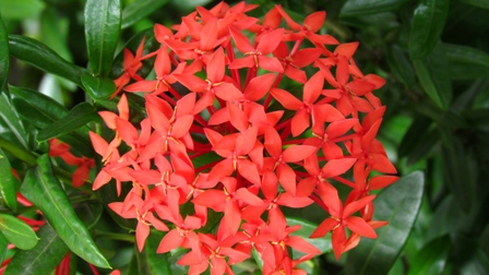 Fleur tropicale2