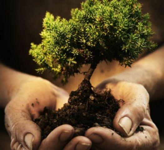 planter_un_arbre